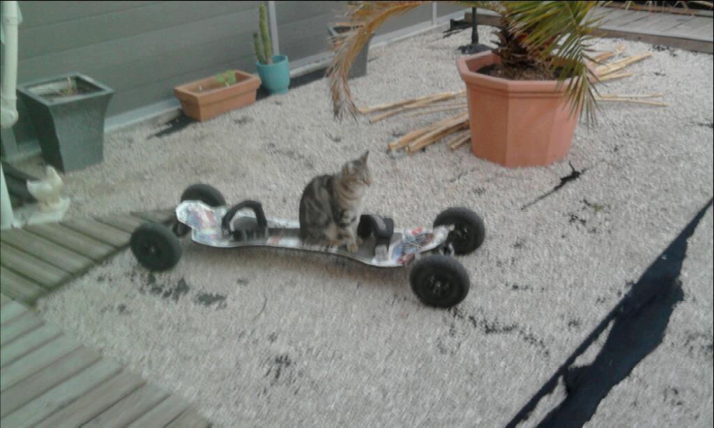 Meme mon chat kiff le MTB